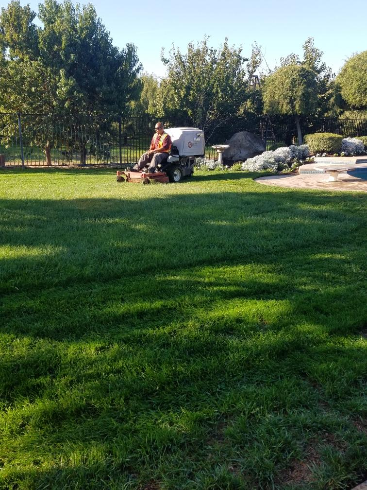 Lawn and Yard Maintenance by Tovar Landscape Co.